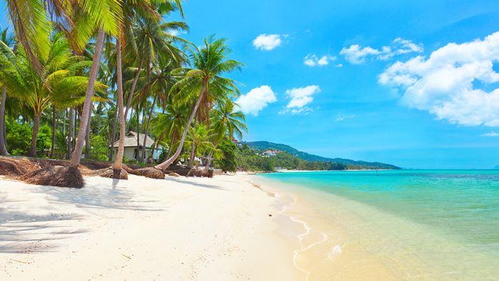 Koh Samui được mệnh danh là sứ sở của dừa