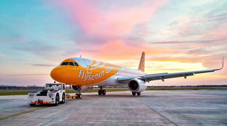 Quy định Scoot về vật nuôi, hàng hóa nguy hiểm, hàng hóa đặc biệt khi bay!